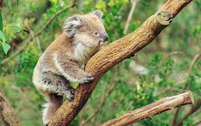 Future-proof Australia by Revitalising our Wildlife